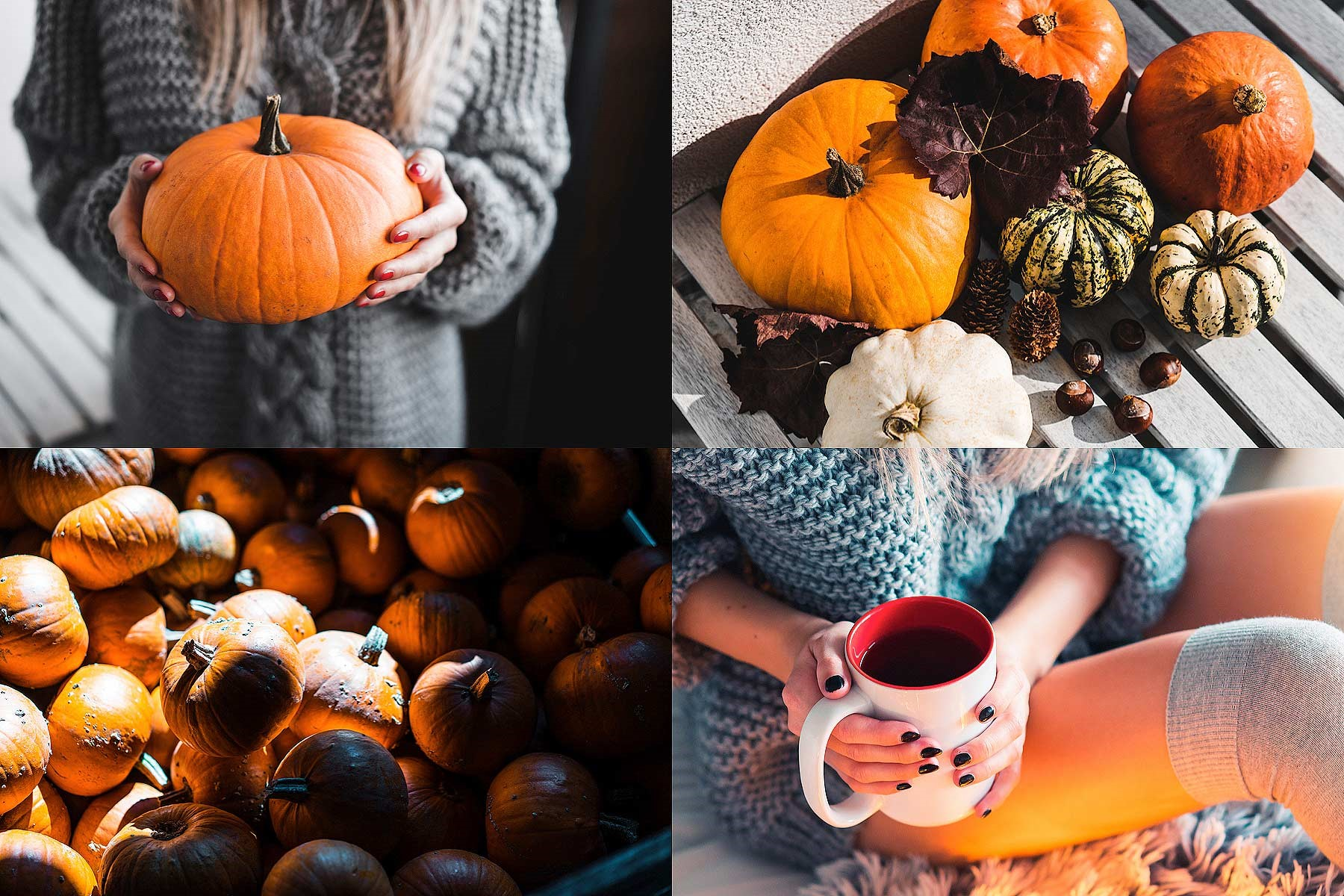 Our Favorite Autumn Activities in San Diego: Have no fear, Pumpkin Spice season is here!